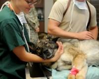 veterinary-85925_640